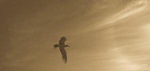 """""""Чайка Джонатан Ливингстон"""" Ричард Бах фотография чайки."""