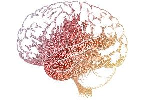 Читающий мозг