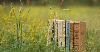 «Книжные аллеи» в Петербурге