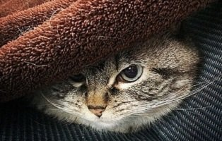 «Антрепренер под диваном» А. П. Чехов