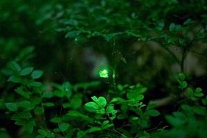 Светлячок рассказ Харуки Мураками