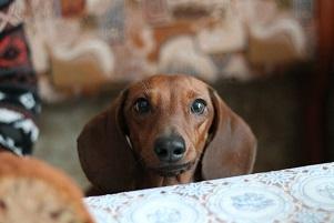 «Чему может научить собака» Джой Нордквист
